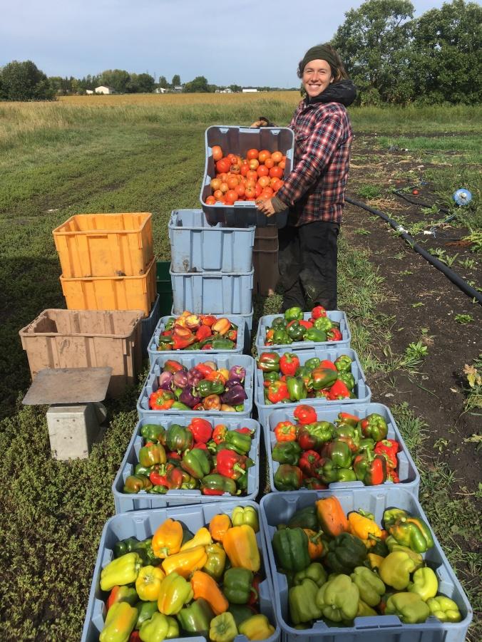Jonathan's Farm | Fresh, local, naturally grown
